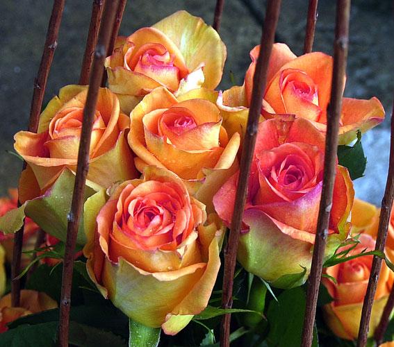 Blumenstrauss 567x500 Pixel